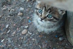 Μυστήριος κοιτάξτε ενός χαριτωμένου μπλε-eyed γατακιού στοκ εικόνα με δικαίωμα ελεύθερης χρήσης