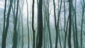 Μυστήριο δάσος Στοκ Φωτογραφία
