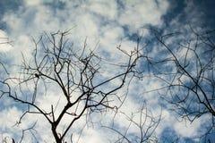 Μυστήριο δέντρο με το σύννεφο Στοκ Εικόνες