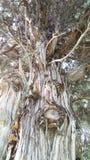 Μυστήριο δέντρο νεκροταφείων Στοκ Εικόνα