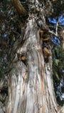 Μυστήριο δέντρο νεκροταφείων Στοκ Φωτογραφίες