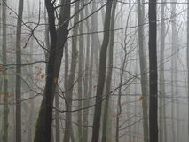 Μυστήριο δάσος δέντρων οξιών της Misty Νοέμβριος μετά από την πτώση βροχής γυμνή Στοκ εικόνες με δικαίωμα ελεύθερης χρήσης