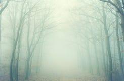 Μυστήριο δάσος στην ομίχλη Στοκ Εικόνα