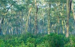 Μυστήριο δάσος στοκ φωτογραφία με δικαίωμα ελεύθερης χρήσης