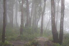 Μυστήριο ομιχλώδες δάσος το χειμώνα μετά από τη βροχή Στοκ φωτογραφίες με δικαίωμα ελεύθερης χρήσης