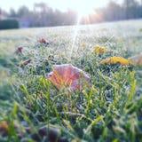 Μυστήριο πρωινού Στοκ φωτογραφία με δικαίωμα ελεύθερης χρήσης