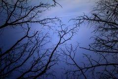 Μυστήριο τοπίο νύχτας στους κρύους τόνους - οι σκιαγραφίες του γυμνού δέντρου διακλαδίζονται ενάντια στο δραματικό νεφελώδη ουραν στοκ φωτογραφία με δικαίωμα ελεύθερης χρήσης