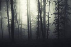 Μυστήριο υπερφυσικό δάσος με την ομίχλη Στοκ Εικόνες