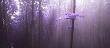Μυστήριο φως πέρα από το δέντρο στην πορφυρή ομίχλη στο δάσος στοκ φωτογραφία