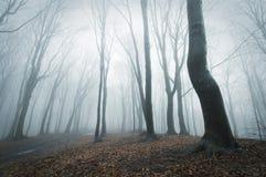Μυστηριώδης σκηνή σε ένα δάσος με την ομίχλη στοκ φωτογραφίες