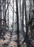 Μυστηριώδης αυγή Στοκ Εικόνα