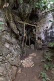 Μυστική και μυστήρια πόρτα της ιερής εισόδου σπηλιών στη ζούγκλα Στοκ Εικόνες