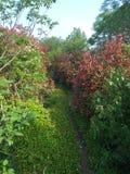 Μυστικός δρόμος που περιβάλλεται από τα λουλούδια και τα δέντρα στοκ φωτογραφία με δικαίωμα ελεύθερης χρήσης