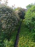 Μυστικός δρόμος που περιβάλλεται από τα λουλούδια και τα δέντρα στοκ εικόνες με δικαίωμα ελεύθερης χρήσης