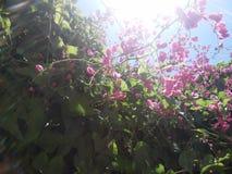 Μυστικός κήπος στη Νότια Αμερική στοκ εικόνες