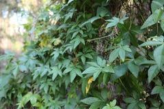 Μυστικός κήπος του Περθ Στοκ φωτογραφία με δικαίωμα ελεύθερης χρήσης