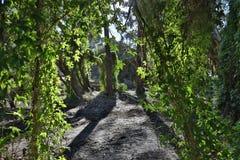 Μυστικός κήπος του Περθ Στοκ εικόνες με δικαίωμα ελεύθερης χρήσης