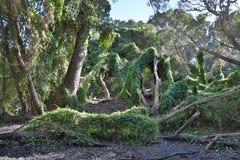 Μυστικός κήπος του Περθ Στοκ Εικόνες
