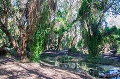 Μυστικός κήπος: Υγρότοποι Careniup στοκ φωτογραφία