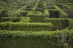 Μυστικός κήπος Wanderers στοκ εικόνα