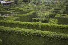 Μυστικός κήπος Wanderers στοκ εικόνες με δικαίωμα ελεύθερης χρήσης