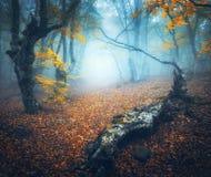 Μυστικό δάσος φθινοπώρου με την πορεία στην ομίχλη παλαιό δέντρο Στοκ φωτογραφία με δικαίωμα ελεύθερης χρήσης