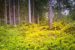Μυστικό δασικό σύνολο των δέντρων πράσινοι θάμνοι Στοκ Εικόνες