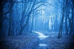 Μυστικό δάσος φθινοπώρου με το ίχνος στην μπλε ομίχλη Όμορφο τοπίο με τα δέντρα, πορεία, ομίχλη ενάντια ανασκόπησης μπλε σύννεφων στοκ εικόνες με δικαίωμα ελεύθερης χρήσης