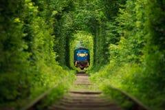 Μυστικό τραίνο «σήραγγα της αγάπης» στην Ουκρανία Καλοκαίρι Στοκ Εικόνες