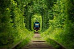Μυστικό τραίνο «σήραγγα της αγάπης» στην Ουκρανία Στοκ φωτογραφίες με δικαίωμα ελεύθερης χρήσης
