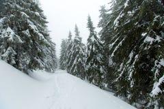Μυστικό χειμερινό δάσος που καλύπτεται με το χιόνι τη νεφελώδη ημέρα Στοκ εικόνα με δικαίωμα ελεύθερης χρήσης