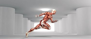 Μυϊκό τρέξιμο συστημάτων διανυσματική απεικόνιση