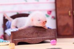 Μωρό κουναβιών στο σπίτι κουκλών Στοκ εικόνες με δικαίωμα ελεύθερης χρήσης