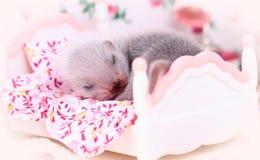 Μωρό κουναβιών στο σπίτι κουκλών Στοκ Εικόνες