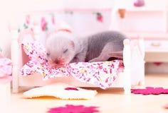 Μωρό κουναβιών στο σπίτι κουκλών Στοκ φωτογραφία με δικαίωμα ελεύθερης χρήσης