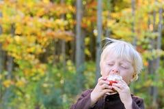 Μωρό που τρώει τα φρούτα στον οπωρώνα της Apple Στοκ εικόνα με δικαίωμα ελεύθερης χρήσης