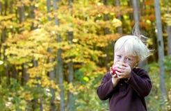 Μωρό που τρώει τα φρούτα στον οπωρώνα της Apple Στοκ Εικόνες