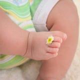 Μωρό ποδιών με chamomile στα δάχτυλα Στοκ εικόνα με δικαίωμα ελεύθερης χρήσης