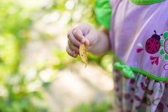 Μωρό στο ρόδινο φόρεμα που κρατά ένα φύλλο Στοκ Εικόνες