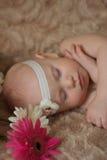 Μωρό ύπνου στα λουλούδια Στοκ Φωτογραφία