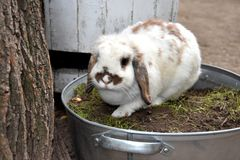 Μωρό babbit Στοκ Εικόνες