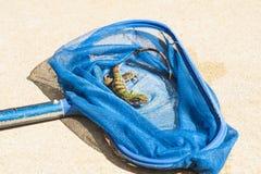 Μωρό Iguana σε ένα δίκτυο λιμνών Στοκ φωτογραφίες με δικαίωμα ελεύθερης χρήσης