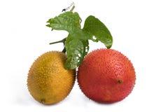Μωρό jackfruit Στοκ Φωτογραφίες