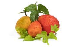 Μωρό jackfruit Στοκ εικόνες με δικαίωμα ελεύθερης χρήσης