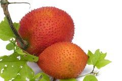Μωρό jackfruit Στοκ Φωτογραφία