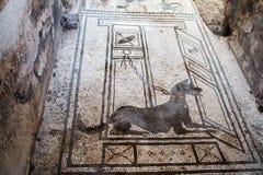 Μωσαϊκό ενός σκυλιού σε μια βίλα της archeological περιοχής της Πομπηίας Στοκ Εικόνες