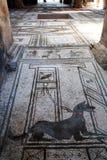 Μωσαϊκό ενός σκυλιού σε μια βίλα της archeological περιοχής της Πομπηίας Στοκ φωτογραφία με δικαίωμα ελεύθερης χρήσης