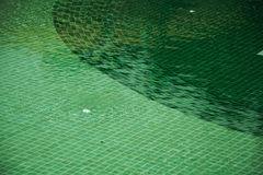 Μωσαϊκό της πισίνας πράσινου Στοκ Εικόνες