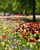 Μωσαϊκό των λουλουδιών βολβών Στοκ φωτογραφία με δικαίωμα ελεύθερης χρήσης