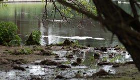 Μόλυβδοι ιχνών φύσης στη λίμνη στοκ εικόνες με δικαίωμα ελεύθερης χρήσης